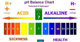 Acid Alkaline Ph Balance In The Gut Is So Important