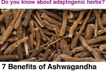 If You Are Stressed You Must Try Ashwagandha - The Powerful Adaptogenic Herb
