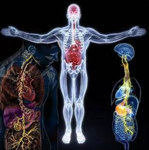 The Gut Brain Axis