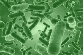 What are Human Strain Probiotics?