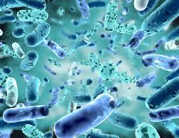 Lose Weight with Probiotics
