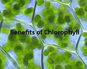 The Many Benefits of Chlorophyll