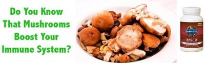 Support Your Health This Flu Season With Medicinal Mushrooms